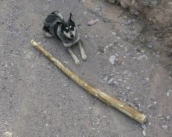 Agave Wood for Didgeridoo