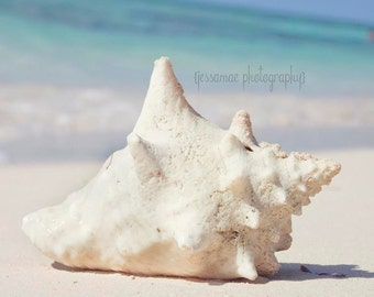 Conch Shell Photography, Seashell Art, Caribbean Art, White Conch Shell Print, Turquoise Blue, Ocean Art, Seashell Print, Pastel Beach Art