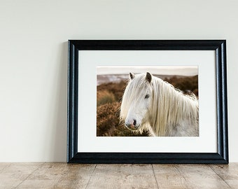 White Horse photo, Pony photo, Horse photography, Animal Photography, Mounted Photograph, Pony lover gift, Equestrian Decor, Gift for her