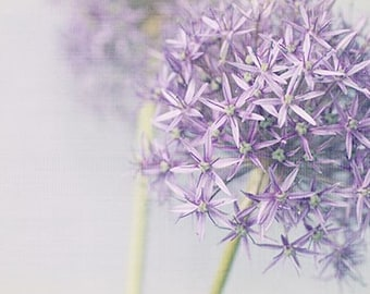 Allium Flower Photography, Flower Photo Print,  Ethereal Floral Art Print, Purple Wall Decor,  Floral Still Life, Nature Photography