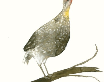 Partridge Fine Art Print from Original Watercolor