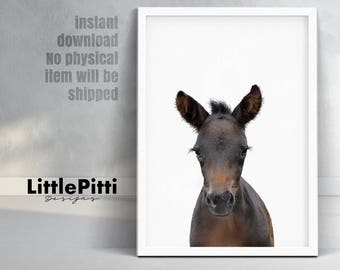 Baby foal print, cute nursery animal art, foal photo, modern wall print, cute baby horse, minimalist nursery wall art, horse poster, digital
