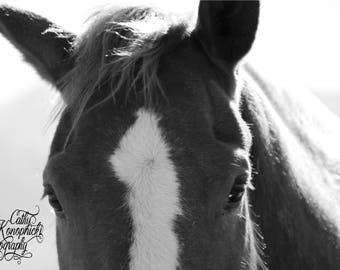 Black and White Horse Face, Digital Download, Horse Photo, Black and White Photo, Horse Face Photo, Horse Face, Nature Photos, Animal Photos