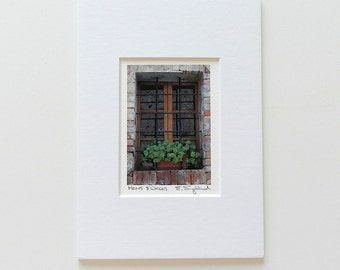 Italian Window Photography, Hens Chicks Italy Print, Miniature Art Matted, Rustic Italian Art, Italy Wall Art, Succulent Photography