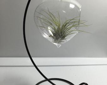 DIY Hanging Air Plant Glass Terrarium Globe / Terrarium Glass / Terrarium Container
