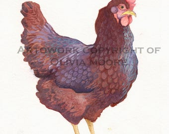 """Chicken Watercolor Painting - Original Painting of a Rhode Island Red Hen - Kitchen Wall Art - Farmhouse Decor - 7"""" x 6"""""""