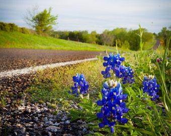 Texas Bluebonnets Along a Highway