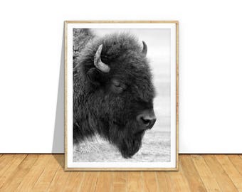Buffalo Print, Buffalo Photography Printable Wall Art, Buffalo Download, Buffalo Photo, Southwestern Decor, Bison, Animal Art  bu1c1bw