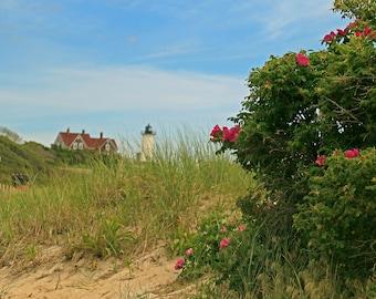 Nobska Lighthouse, Rosa Rugosa, Cape Cod Photography, 11x14, Ready To Ship, Woods Hole, MA, Wall Art, Home or Office Decor, Cape Cod Roses