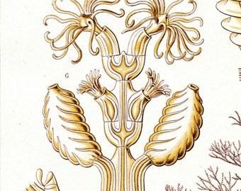 Neptune Plant, Plant Scientific, Neptune Scientific, Plant Neptune, Neptune Drawing, Scientific Drawing, Scientific Plant, Plant Drawing