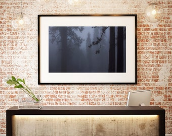 Sequoia   Grey Tree   Fine Art Photography   Photo   Fog   Mist   Mystic   Shadow   Silhouette   polychromatophil   Art   Mysterious