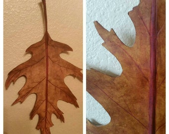 Oak Leaf Sculpted Leather