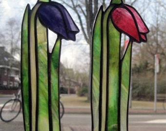 Nederlandse tulpen zonnevanger