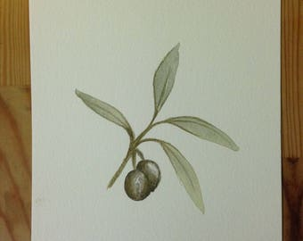 Still life. Olive Branch