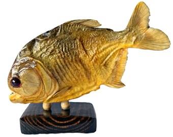 Taxidermy Piranha Fish Vintage 7 Inches Mounted Carnivore Wildlife Animal Teeth