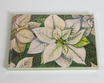White Poinsettia - Botanical Illustration Greeting Cards - Set of 8