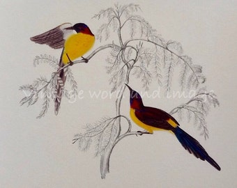Mrs Gould's Sunbird Art Print Vintage Lithograph Tropical Birds Home Office Decor British Natural History Book Plate Reprint Ornithology