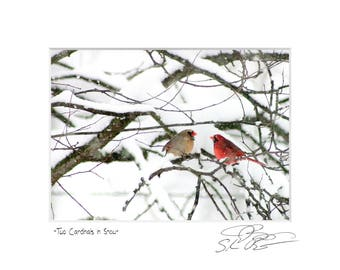 Two Cardinals in Snow Wildlife Winter Photograph romantic Valentine's gift bird picture wall art winter snow