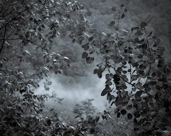 portal, 8x10 fine art black & white photograph, nature