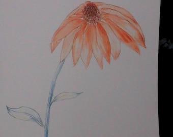 Cone Flower watercolor print 9x12