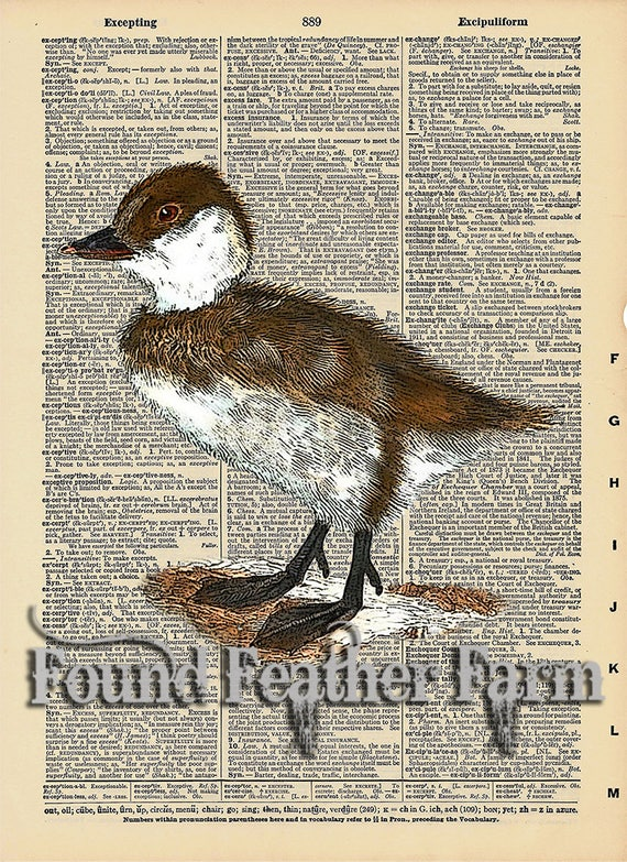 """Vintage Antique Dictionary Page with Antique Print """"Baby Duckling"""""""