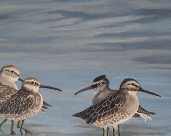 Sandpipers walking in the Sea