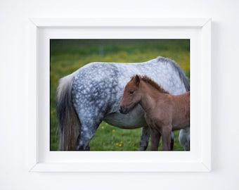 Mama and baby Icelandic horse print - Farm photograph - Foal photography - Nursery wall art - Pony photo print - Fine art - Baby shower gift