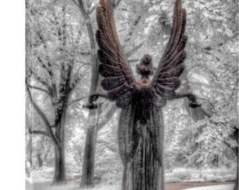 Canvas Art, Home Decor, Wall Art, Missouri Botanical Garden, STL Home Decor, Garden Angel - Fine Art Photography - Infrared Photography