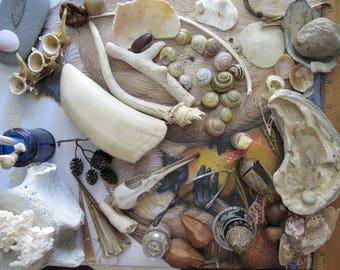 10/20/50 Item Nature Curiosity Collection Grab Bag - Fossil & Mineral Specimen - curio shelf natural curiosity cabinet oddity biology study