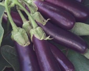 300 Long Purple Italian Egg plant Seeds eggplant