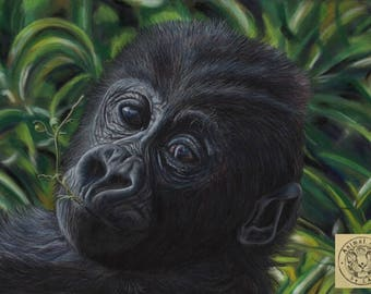 Baby Mountain Gorilla Fine Art Canvas Print - 40 x 60cm