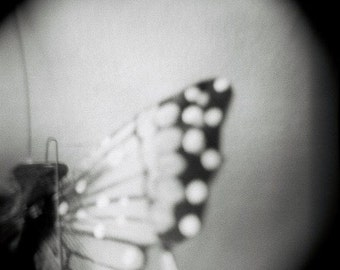 Still Life Butterfly Photograph, fine art black and white, home decor holga, nature photo wings, dreamy blur vintage style change spring fly