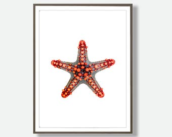 Starfish Download, Starfish Decor, Ocean Animals, Starfish Poster Art, Starfish Wall Prints, Printable Starfish, Sea Prints, Feliss-Art
