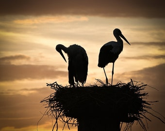 Family life Togetherness 5x5 fine art print Two birds Storks silhouettes in the evening sky Wedding gift Orange home decor for Ikea RIBBA