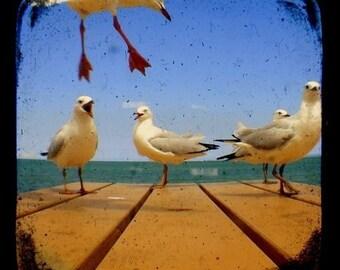 Bird Photography Print TtV 5x5 Seagull Photo - In Flight - Turquoise Ocean, Seaside Summertime Animal Photograph