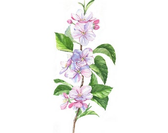 Cherry Blossom Branch Flower Original Watercolour Painting 32