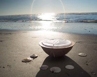 Biodegradable Sand Dollar Urn -  cremation, funeral, handmade urn