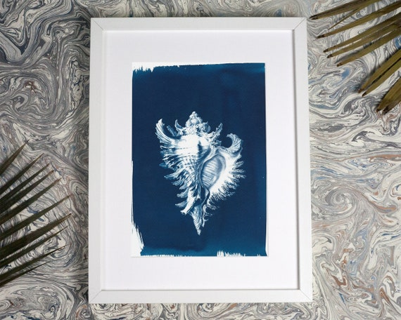 Conch Shell Drawing by Ernst Haeckel, Cyanotype Print, Beach Decor, Art Forms in Nature, Sea Shell, Botanical Print, Nautical Decor, Ocean