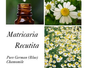German Chamomile Essential Oil, Chamomile Blue Essential Oil, Blue Chamomile EO,  Matricaria recutita – 100% Pure German (Blue) Chamomile EO