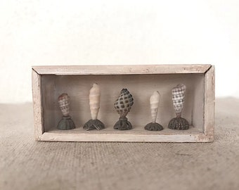 Dollhouse Miniature, Wood theca with shells in 1:12 scale