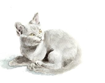 "Original watercolor,baby cat painting,chartreux cat,original painting,8""x8"",home decor"