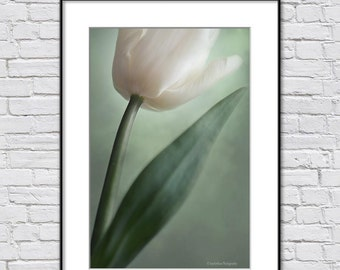 Fine Art Photography, Floral Wall Art Photo Print, Tulip Photography,  Green Off-White Spring Flower Photo, Art Gift For Woman
