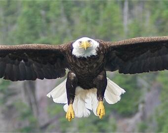 Eagle Wide Spread DSC8014