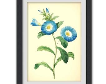 Blue botanical digital print, PDF flower art work, 8 x 10 botany print Digital Download No 54