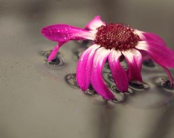 Flower on water
