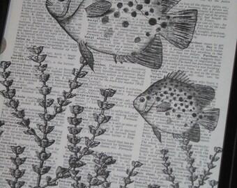 Sea Life Art Print Ocean Art Print Dictionary Art Print Fish Art Print Upcycled Wall Art A HHP Original Design 8 x 10