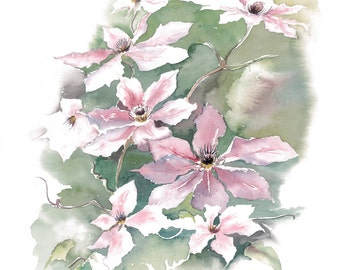 Clematis Watercolour Floral Print, Botanical art