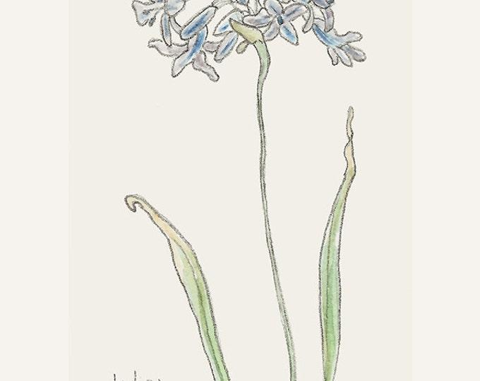 195 Tiny Botanical Indian Hyacinth | Delicate Flower