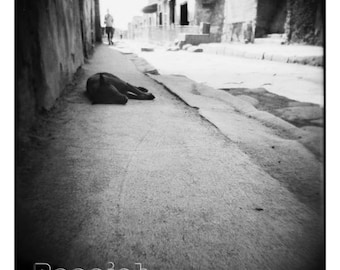 """Limited Edition Pompeii Dog on Street Italy 24x24"""" Metallic Photograph Matted and Framed"""