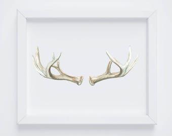 Antlers No 1 Art Print - Antler Painting - Antler Watercolor Painting - Antler Painting - Antler Art - Deer Antlers - Southwestern art -